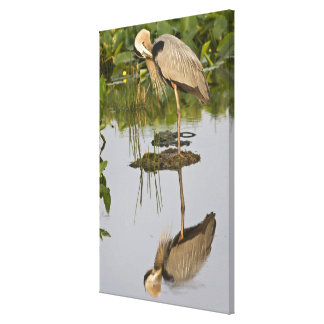 USA, Florida, Delray Beach. Great blue heron Canvas Print