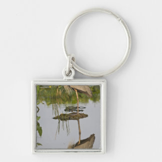 USA, Florida, Delray Beach. Great blue heron Key Ring