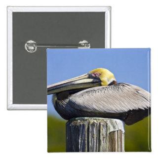 USA, Florida, Everglades City, Big Cypress 15 Cm Square Badge