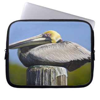 USA, Florida, Everglades City, Big Cypress Laptop Sleeve