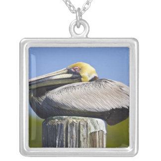 USA, Florida, Everglades City, Big Cypress Silver Plated Necklace