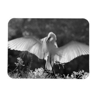 USA, Florida, Great Egret (Ardea alba) infrared 2 Rectangular Photo Magnet
