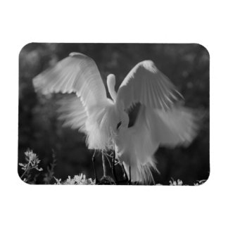 USA, Florida, Great Egret (Ardea alba) infrared 3 Rectangular Magnets