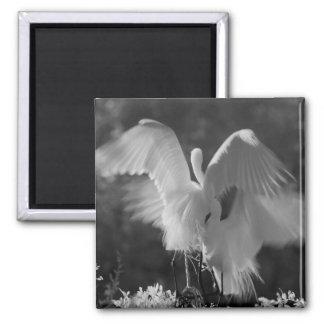 USA, Florida, Great Egret (Ardea alba) infrared 3 Square Magnet