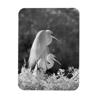 USA, Florida, Great Egret (Ardea alba) infrared Rectangular Photo Magnet