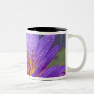 USA, Florida, Lake Kissimmee. Green leaf frog Two-Tone Coffee Mug