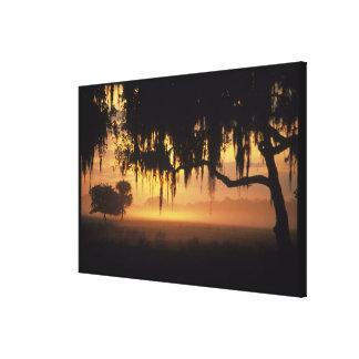 USA, Florida, Lake Kissimmee. Sunrise silhouette Canvas Print