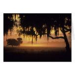 USA, Florida, Lake Kissimmee. Sunrise silhouette Card