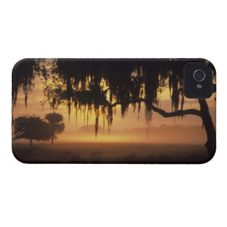 USA, Florida, Lake Kissimmee. Sunrise silhouette Case-Mate iPhone 4 Case