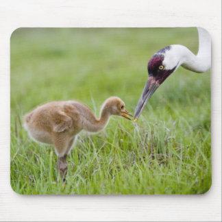 USA, Florida, Lake Kissimmee. Whooping crane Mouse Pad