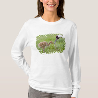 USA, Florida, Lake Kissimmee. Whooping crane T-Shirt