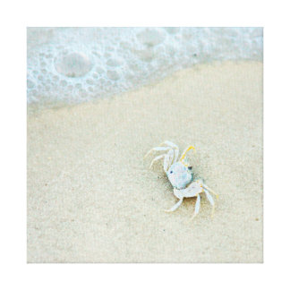 USA, Florida. Little Crab In The Surf Canvas Prints