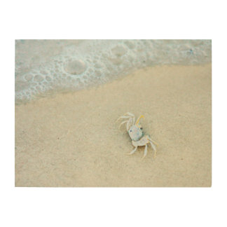 USA, Florida. Little Crab In The Surf Wood Canvases