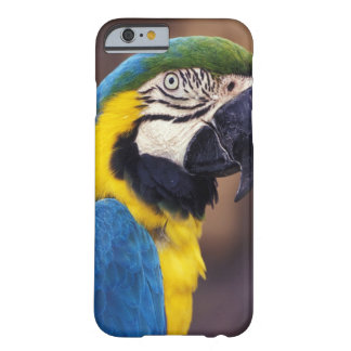 USA, Florida. Macaw Barely There iPhone 6 Case