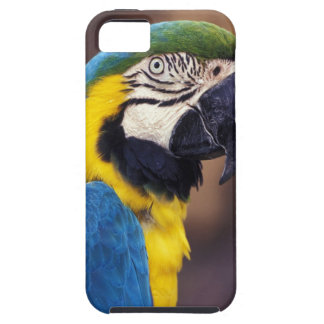USA, Florida. Macaw iPhone 5 Cover