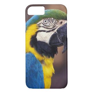 USA, Florida. Macaw iPhone 7 Case
