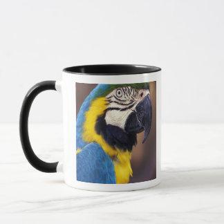 USA, Florida. Macaw Mug