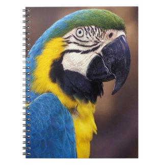 USA, Florida. Macaw Notebooks