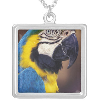 USA, Florida. Macaw Silver Plated Necklace