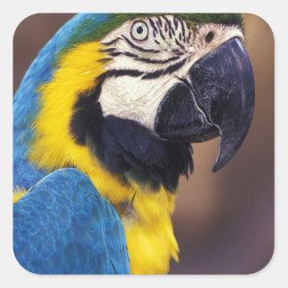 USA, Florida. Macaw Square Sticker