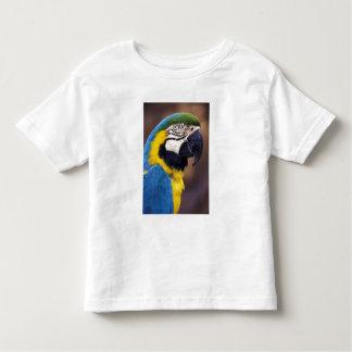 USA, Florida. Macaw Toddler T-Shirt
