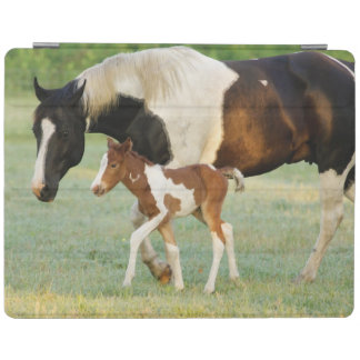 USA, Florida, Newborn Paint filly iPad Cover