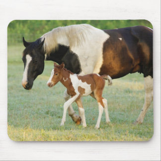 USA, Florida, Newborn Paint filly Mouse Pad