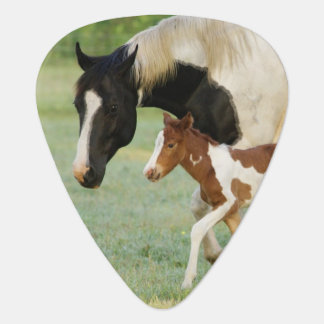 USA, Florida, Newborn Paint filly Plectrum