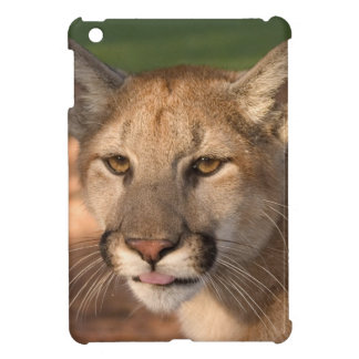 USA, Florida panther (Felis concolor) is also Case For The iPad Mini