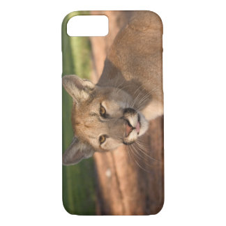 USA, Florida panther (Felis concolor) is also iPhone 8/7 Case
