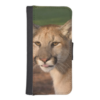 USA, Florida panther (Felis concolor) is also iPhone SE/5/5s Wallet Case