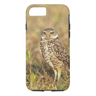 USA, Florida, Pompano Beach. A burrowing owl in iPhone 8/7 Case
