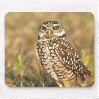 USA, Florida, Pompano Beach. A burrowing owl in Mouse Mat