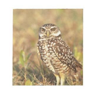 USA, Florida, Pompano Beach. A burrowing owl in Notepad
