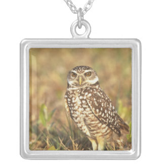 USA, Florida, Pompano Beach. A burrowing owl in Silver Plated Necklace