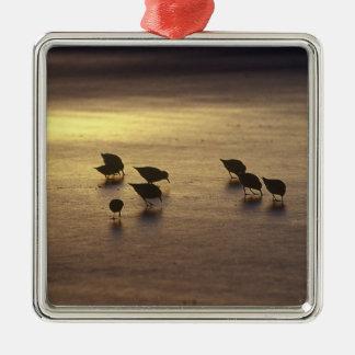 USA, Florida, Sanderlings Christmas Ornament