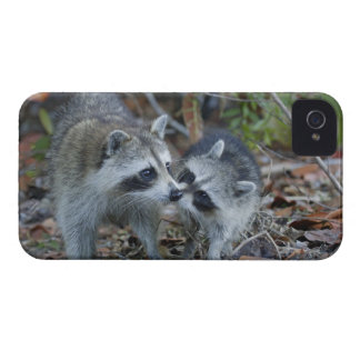USA, Florida, Sanibel, Ding Darling National iPhone 4 Case-Mate Cases