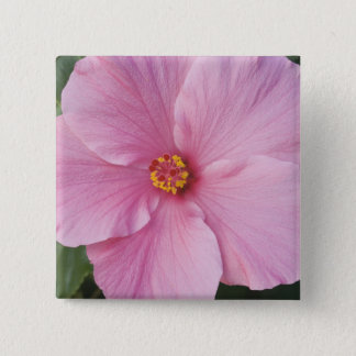 USA, Florida, Sanibel, Hibiscus Rose of 15 Cm Square Badge