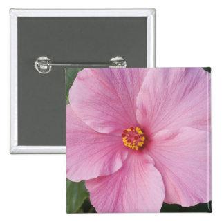 USA, Florida, Sanibel, Hibiscus Rose of 15 Cm Square Badge