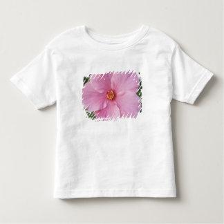 USA, Florida, Sanibel, Hibiscus Rose of T Shirt