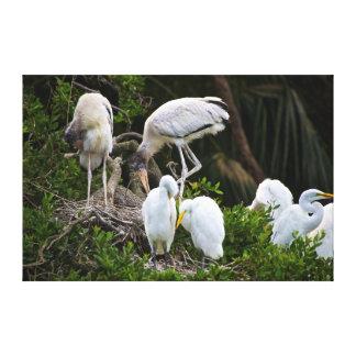 USA, Florida, St. Augustine Alligator Farm Wild Stretched Canvas Print