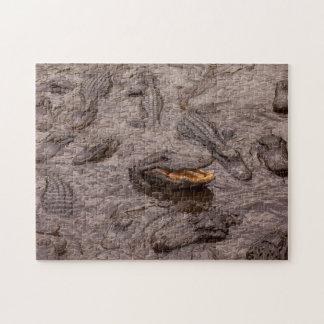 USA, Florida, St. Augustine, Alligators Jigsaw Puzzle
