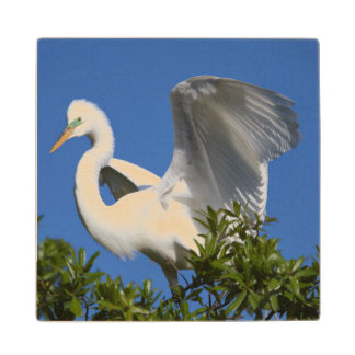 USA, Florida, St. Augustine, Egret Wood Coaster