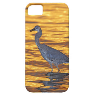 USA, Florida, St. Petersburg, Fort De Soto Park. Barely There iPhone 5 Case