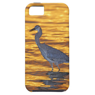 USA, Florida, St. Petersburg, Fort De Soto Park. iPhone 5 Covers