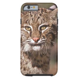 USA, Florida, swamp ecosystem Tough iPhone 6 Case