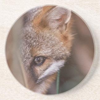 USA, Florida, Swamp Fox Coaster
