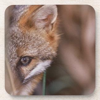 USA, Florida, Swamp Fox Drink Coasters