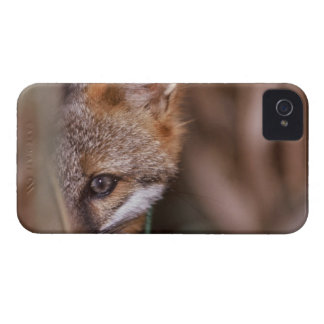 USA, Florida, Swamp Fox iPhone 4 Cover