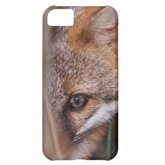 USA, Florida, Swamp Fox iPhone 5C Case